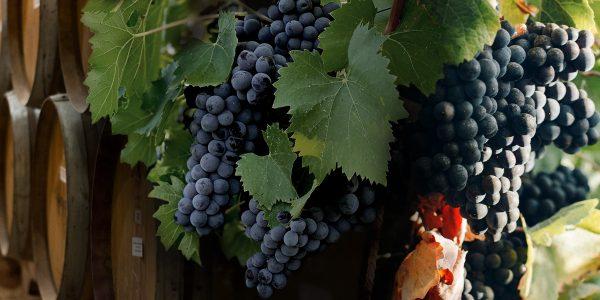 Why-is-Portland-Popular-for-Great-Wines