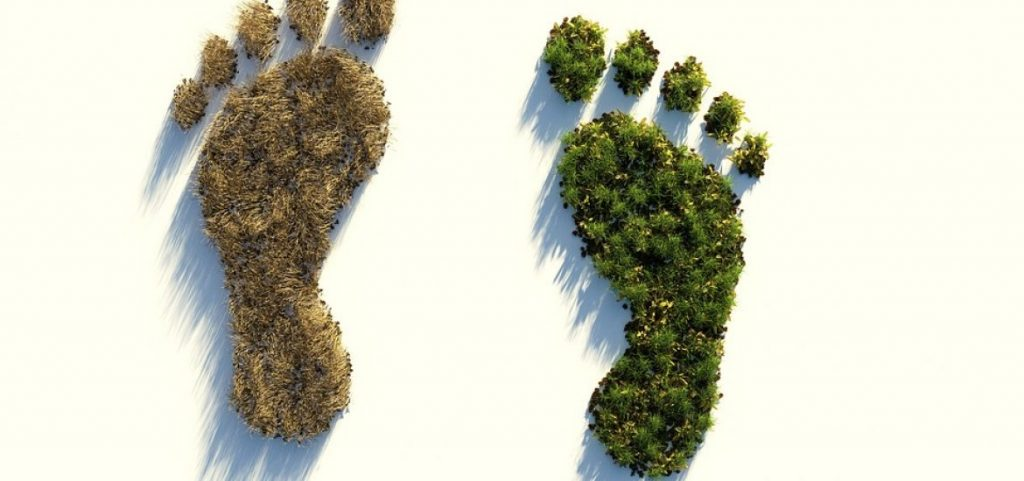Buying Local and Your Eco Footprint