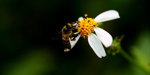 Try Honey Cure for Allergies - Lowkel